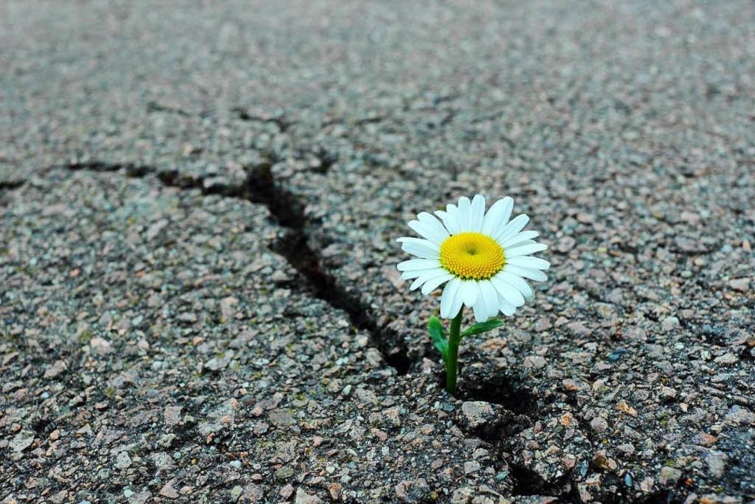 Liebe ist … wenn das Weiche das Harte überwindet   | Foto: adobe.com