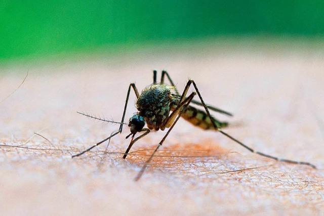 Werden Männer oder Frauen häufiger von Mücken gestochen?