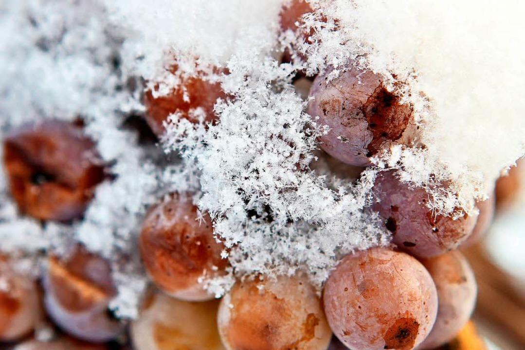 Schneebedeckte Trauben der Sorte Riesling   | Foto: dpa
