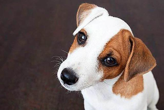 Tierschützer warnen vor unbedachten Haustier-Käufen