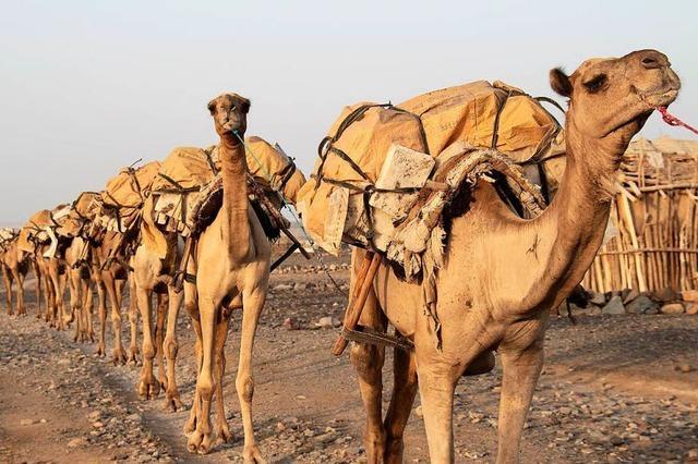 Das achtzehnte Kamel