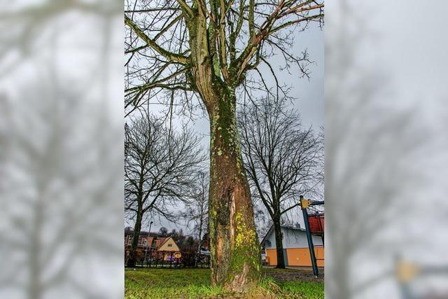 Einige Bäume müssen weichen