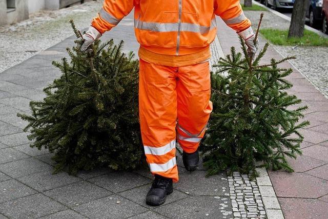 Schicksal der Weihnachtsbäume: Was passiert nun mit ihnen?