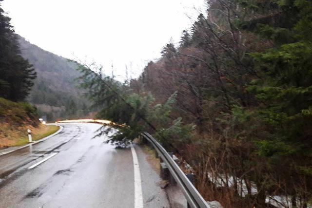 Sturm im Dreisamtal: Wirt der Höfener Hütte über Stunden von Außenwelt abgeschnitten
