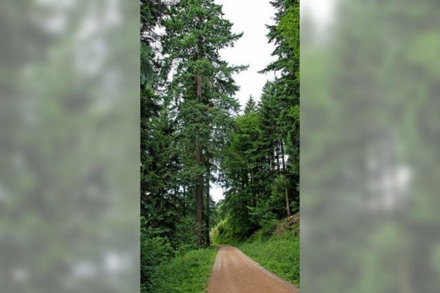 Gewinne im Gemeindewald Steinacker