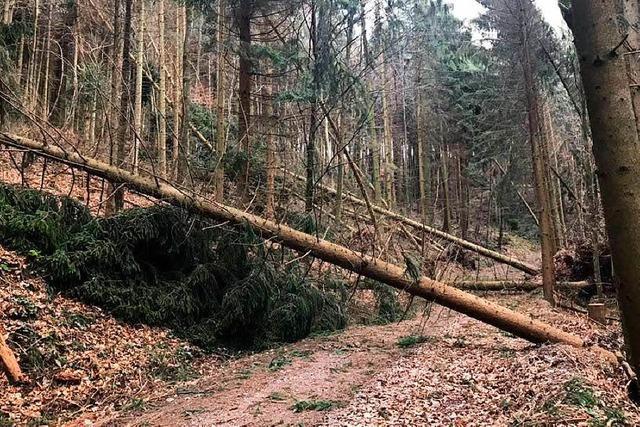 Viele umgestürzte Bäume und eine halbzerstörte Hütte