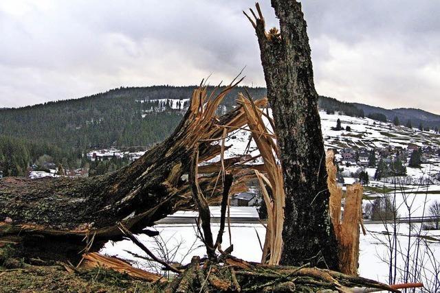 Sturmtief fällt zahlreiche Bäume