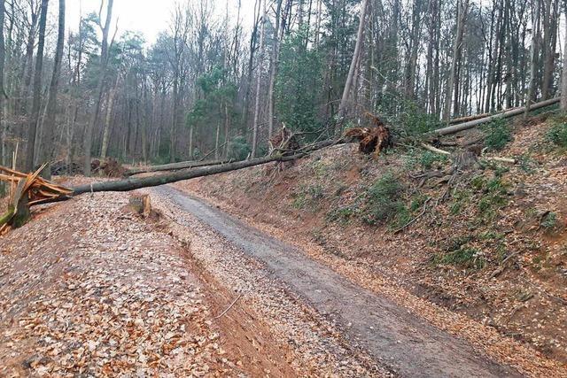 Umgestürzte Bäume blockieren Wege