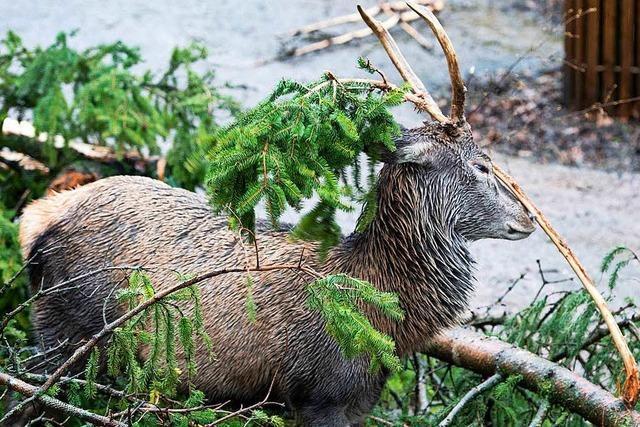 Waldwege in Lörrach sind teilweise gesperrt