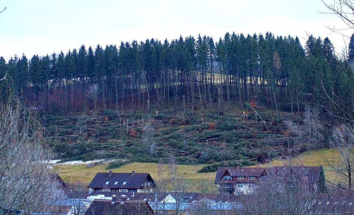 Burglind spielte Baummikado: Das Foto zeigt den Schächele-Wald bei Lenzkirch.      Foto: Manfred G. Haderer