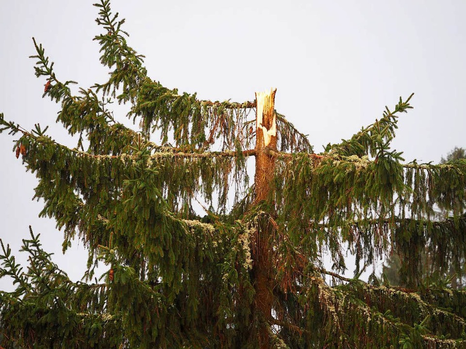Der Sturm setzte dieser Spitze zu.     Foto: Susanne Gilg