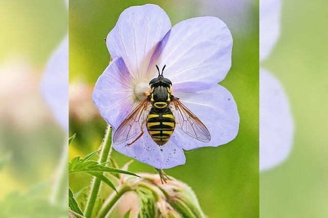Verbände fordern mehr Schutz für Insekten