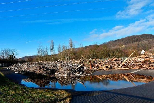Hochwasser bringt Treibgut ans Stauwehr in Wyhlen-Augst