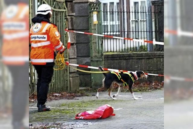 Rettungshunde trainieren Trümmersuche