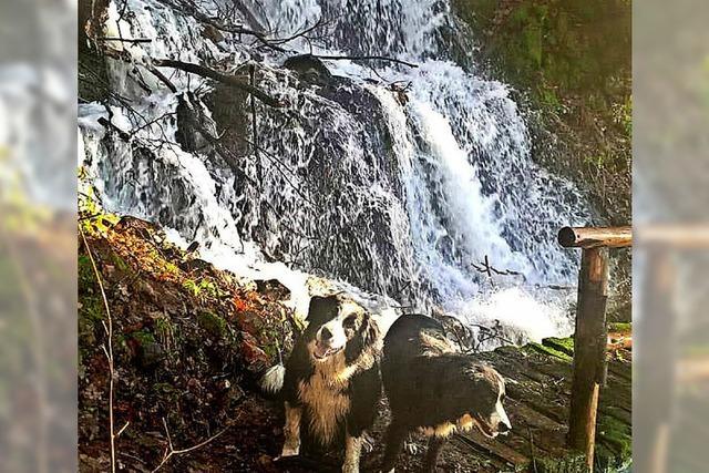 Aus Waldbächen werden Ströme