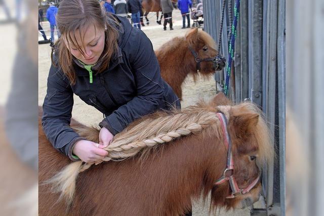 Pferdemarkt in Ellwangen