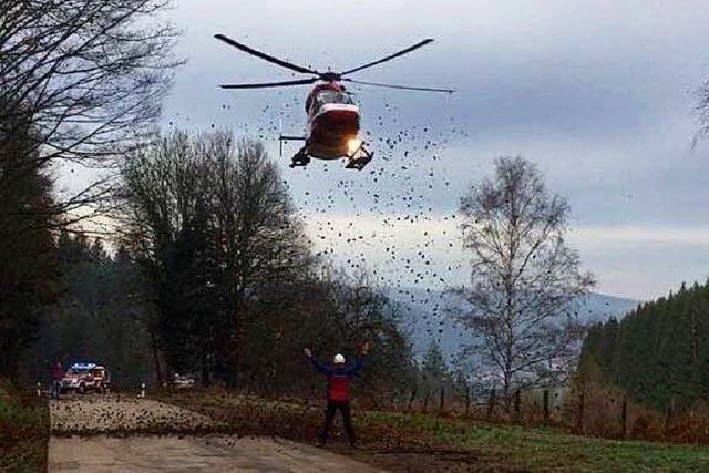Waldarbeiter im Kandelwald schwer verletzt