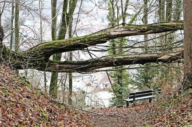 Umgefallener Baum kreuzt Waldweg zum
