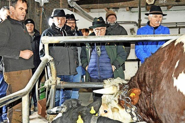 Im Winter bleibt die Kuh angebunden
