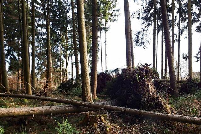 Wie geht's dem Wald im Hotzenwald nach dem Sturm?