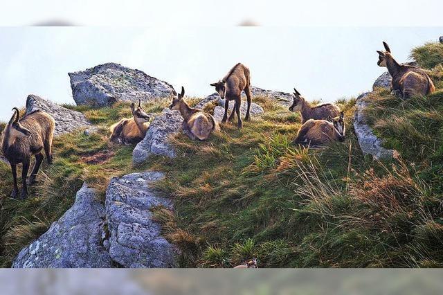 Unsere wilde Heimat – Natur im Südwesten in Schluchsee