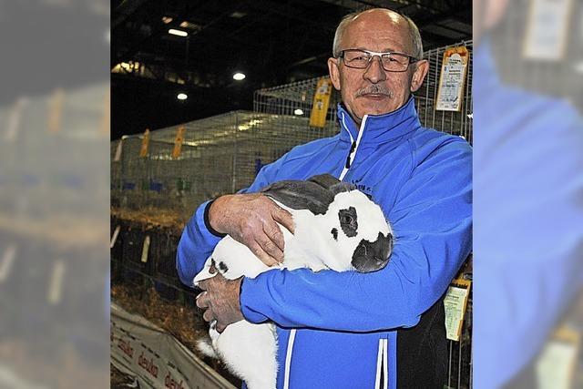 5000 Kaninchen aus 170 Rassen wetteifern um Punkte