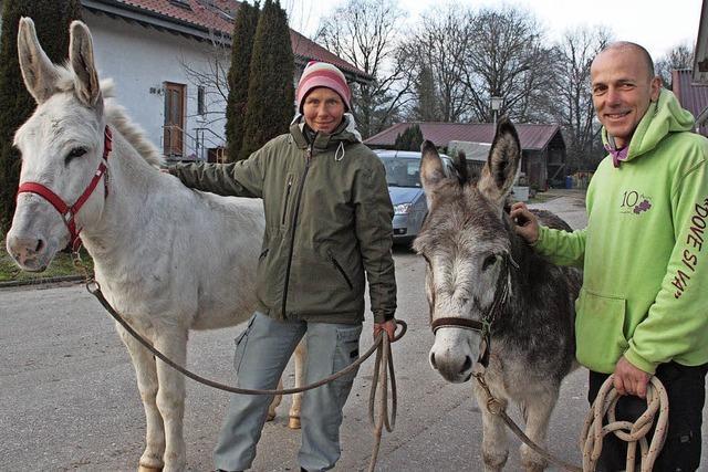 Zu Fuß unterwegs mit zwei Eseln