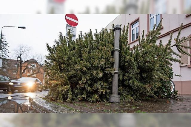 Weihnachtsbaum ade