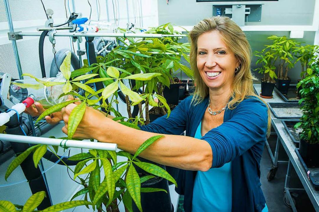 Christiane Werner untersucht, wie sich der Klimawandel auf Pflanzen auswirkt.  | Foto: Klaus Polkowski