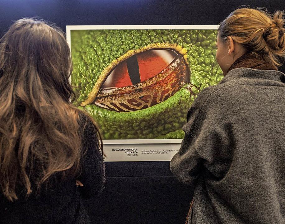 Hingeschaut: Stets bieten die Ausstellungen spektakuläre Ansichten.   | Foto: Tobias Friedrich, Stefan Forster