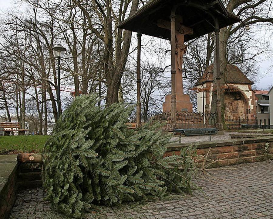 Christbaumsammelstelle für die Innenstadt am Ölberg    Foto: Stadt Offenburg