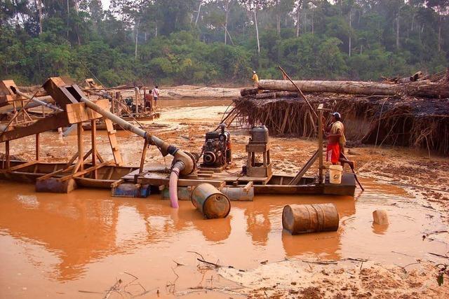 Perus Tropenwälder werden geplündert – der Papst soll intervenieren