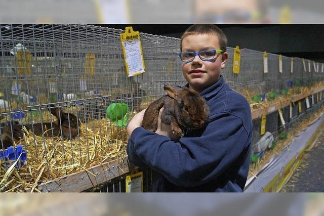 Prüfende Blicke auf 5000 Kaninchen