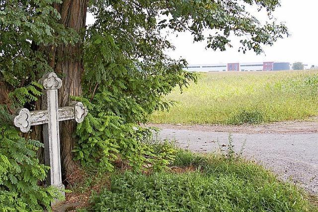 Baumschnitt zum Schutz der Feldlerche