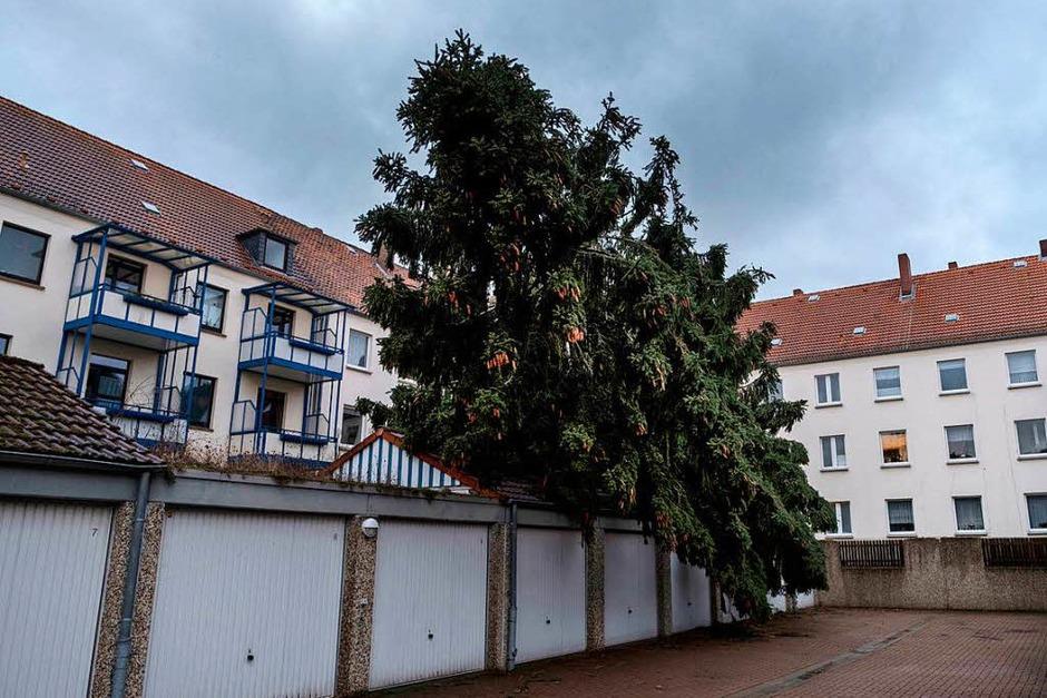 Ein entwurzelter Baum am Stadtrand von Kassel (Foto: dpa)
