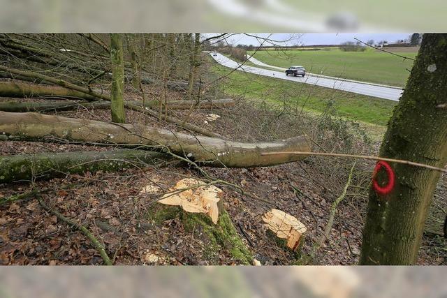 Bäume nicht standsicher