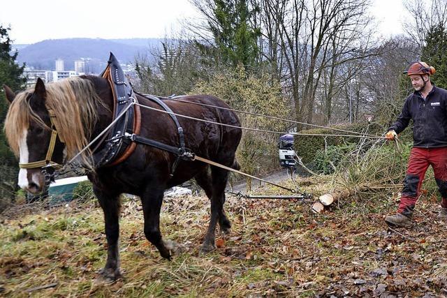Landschaftspflege mit einer Pferdestärke