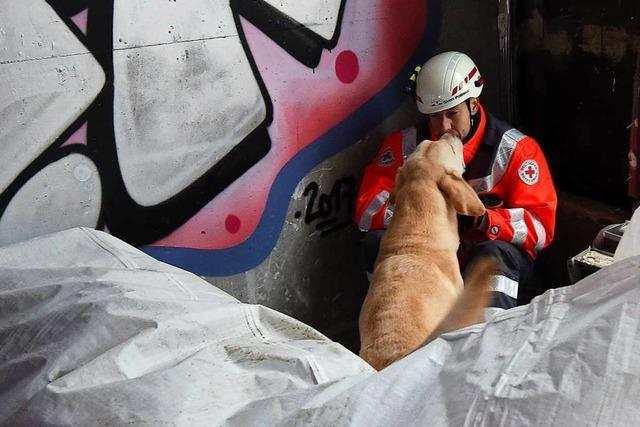 Rettungshunde schnüffeln durch die Trümmer des Freiburger Volksbank-Gebäudes