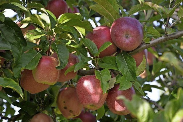 So war das Jahr 2017 für die Obstbauern im Kreis Lörrach