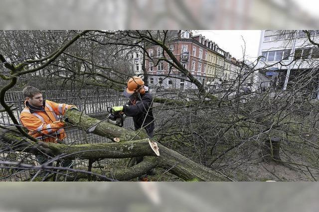 Ein Baumexperte erklärt, wann beschädigte Bäume gefährlich werden