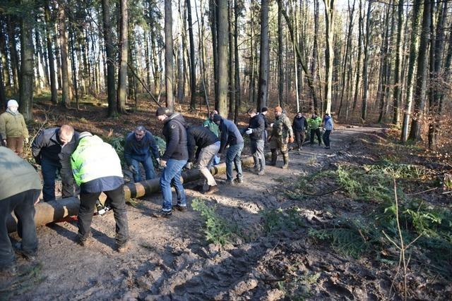 Fotos: Narrenbaumsteller in Grenzach bereiten den Baum vor