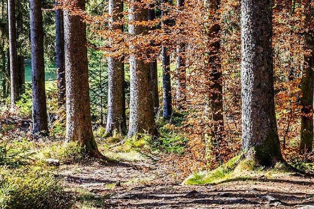 Baum fällt auf Waldarbeiter und verletzt ihn schwer