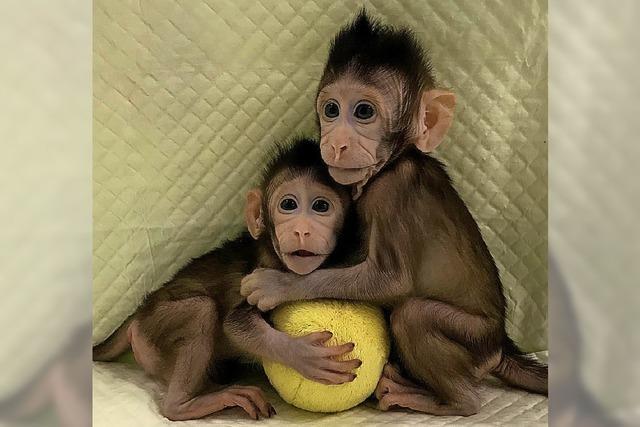 Erster erfolgreicher Klon von Affen
