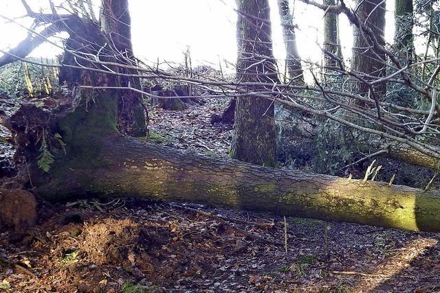 Burglind entwurzelt rund 10 000 Festmeter Holz