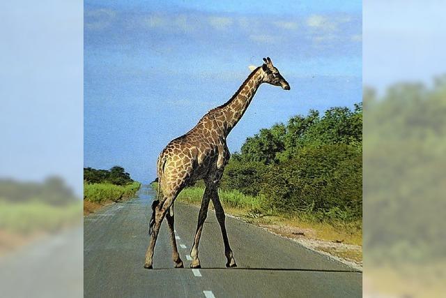 Johannes Reiner berichtet über seine Reise durch Namibia