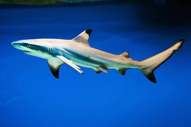 Europas größtes Aquarium für Haie soll in Pfungstadt entstehen