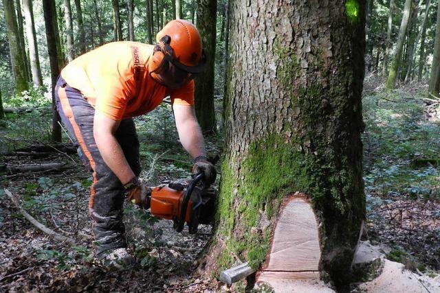 Bei Forstarbeiten lebensgefährlich verletzt