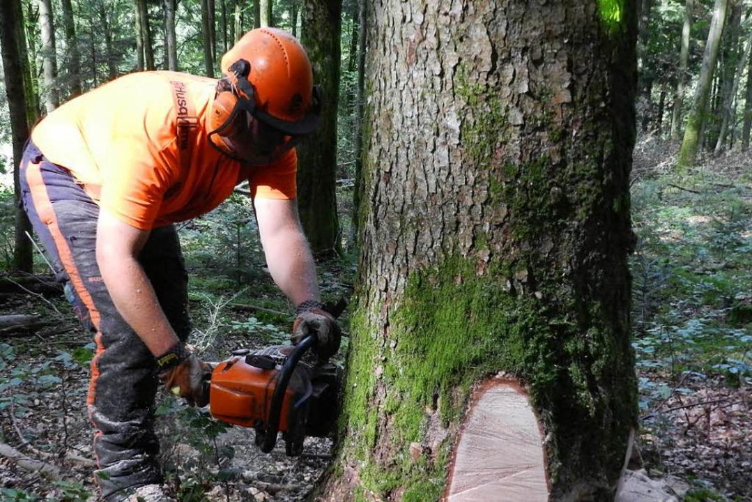 Ein Landwirt wurde  bei Waldarbeiten lebensgefährlich verletzt.   | Foto:  WS