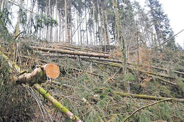 Burglind und Friederike haben im Kleinen Wiesental mehr Schaden angerichtet als Orkan Lothar