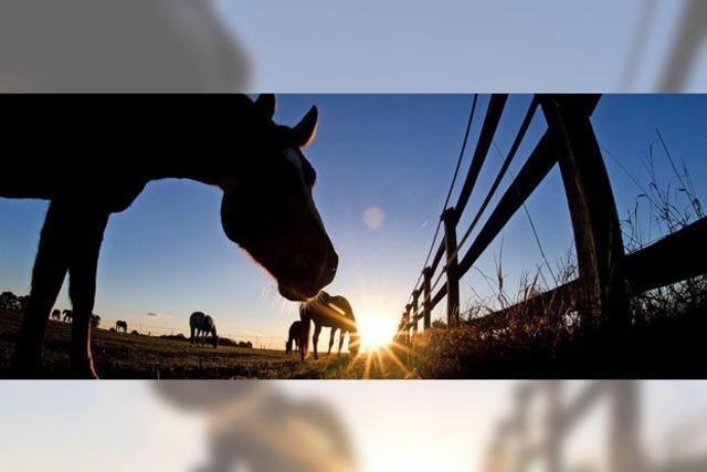 Pferde durch die Hintertür